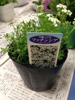 garden041.jpg