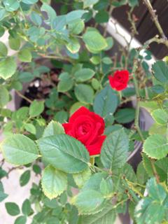image-20141215055322.png